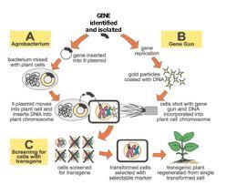 Genetic Engineering Exam Sample Paper of Bangalore University
