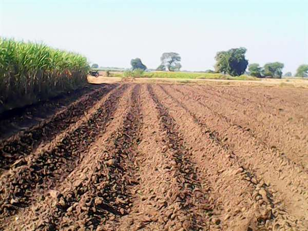 My Agriculture Field