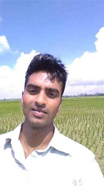 paddy field in back..