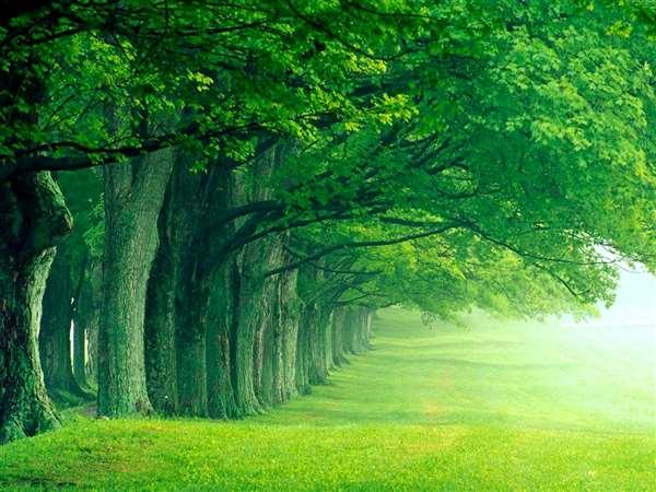 Green land Kings
