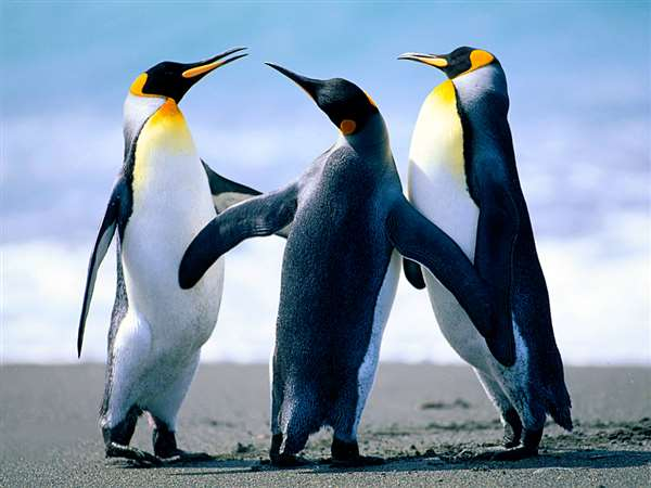 ULTIMATE AWESOME BEAUTIFUL PENGUINS
