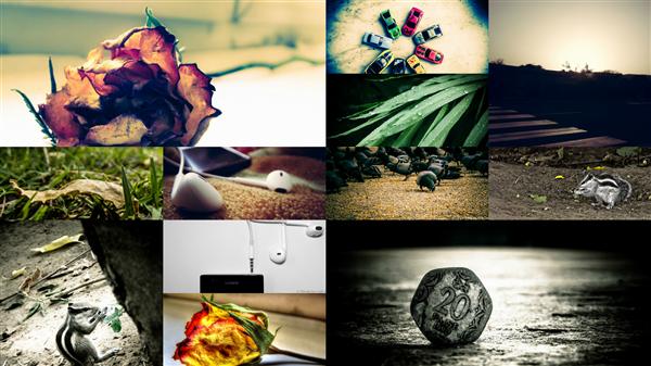 Portfolio of Photography