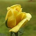 Aneesha V
