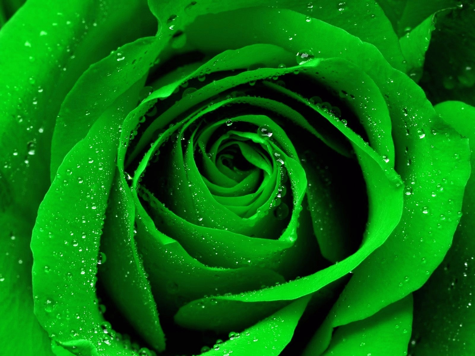 картинка зеленого каталог